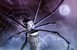 Halloween background. Closeup spider and nightly sky with full m Royalty Free Stock Photography