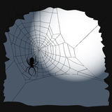 Halloween background - the cobweb and a spider Royalty Free Stock Images