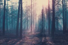 Halloween background. Dark forest with cold blue toning. Halloween scary forest stock image
