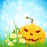 Halloween Background with Flowers and Pumpkin Royalty Free Stock Image