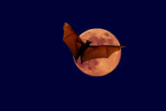 Halloween background with flying bat Royalty Free Stock Image