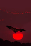 Halloween background with flying bat. Halloween night with bat flying over the red moon Royalty Free Stock Photography