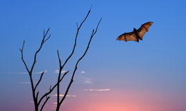 Halloween background with flying bat over bright sky Stock Photo