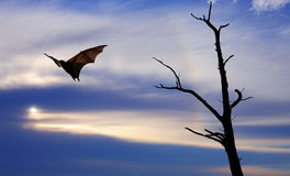 Halloween background with flying fox. Dead Trees silhouette with flying fox Halloween concept Royalty Free Stock Photos