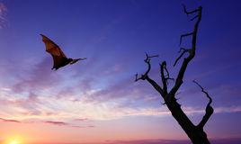 Halloween background with flying fruit bat. Dead Trees silhouette with flying fox Halloween concept Stock Photography