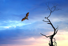 Halloween background with flying fruit fox. Dead Trees silhouette with flying fox Halloween concept Royalty Free Stock Photo