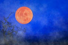 Halloween background ~ Full Moon & Twisted Tree Branches. Fog and Hills In Background Royalty Free Stock Photo