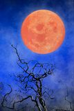 Halloween background ~ Full Moon & Twisted Tree Branches. Halloween background ~ Orange Full Moon, Fog & Twisted Tree Branches With Dark Hills In The Background Royalty Free Stock Images