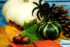 Halloween background - Halloween background -white pumpkin and black spider and autumn leaves on blue background. Halloween background -white pumpkin and black Stock Image