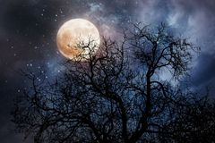 Halloween background with moon and dead tree