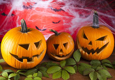 Halloween background with net and spider Royalty Free Stock Photos