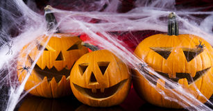 Halloween background with net and spider Stock Image
