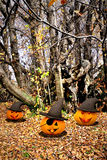 Halloween Background - Pumpkins And Trees Royalty Free Stock Images