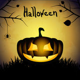 Halloween background with pumpkins and spider. Stock Photos