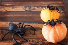 Halloween  background pumpkins and spiders on wooden table Royalty Free Stock Image