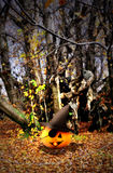 Halloween background - pumpkins and trees Royalty Free Stock Photos
