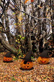 Halloween background - pumpkins and trees Royalty Free Stock Photography