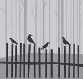 Halloween background with ravens Stock Images