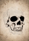Halloween background with skull on old vintage paper Royalty Free Stock Photography