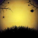 Halloween background with spider. Stock Photos