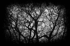 Halloween background with tree branches. Halloween background with twisted tree branches royalty free stock image