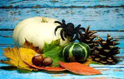 Halloween background - Halloween background -white pumpkin and black spider and autumn leaves on blue background. Halloween background -white pumpkin and black Stock Images