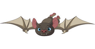 Halloween bat in flight Stock Photos
