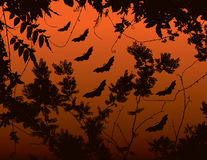 Halloween bats background Stock Image