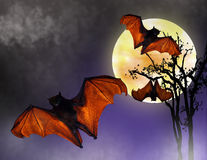Halloween Bats in Full moon Royalty Free Stock Image