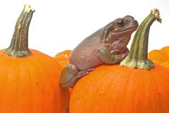 Halloween-Überraschung Lizenzfreies Stockfoto