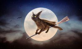 Halloween Black Cat on Broom Over Moon. Cute black cat dressed as Halloween witch flying on broom in night sky in front of full moon royalty free stock images