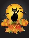 Halloween Black Cat On Carved Pumpkin Illustration Royalty Free Stock Photos