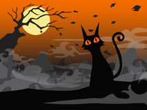 Halloween black cat  in cemetery background Stock Photo