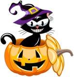 Halloween black cat Inside Pumpkin Stock Photos