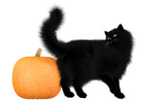 Halloween Black Cat and Pumpkin Royalty Free Stock Photos