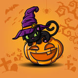 Halloween black cat and pumpkin. Halloween black cat wearing witches hat and pumpkin Royalty Free Stock Photography
