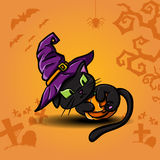 Halloween black cat and pumpkin. Halloween black cat wearing witches hat and pumpkin Stock Photography