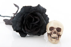 Halloween black rose Stock Photography
