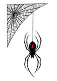 Halloween Black Widow Spider Hangs from its Web Royalty Free Stock Photo