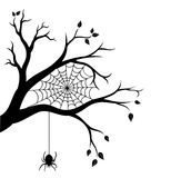 Halloween-boomtak en spinneweb Royalty-vrije Stock Afbeelding