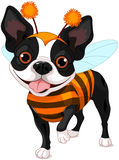 Halloween Boston terrier Royalty Free Stock Photo