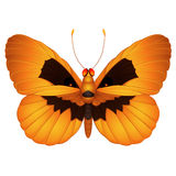 Halloween  butterfly Royalty Free Stock Image