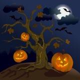 Halloween. Calabazas debajo del árbol Fotografía de archivo libre de regalías