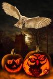 Halloween - calabazas fantasmagóricas - búho Imagen de archivo libre de regalías