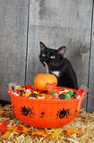 Halloween candy and black cat. With fall leaves on straw bale stock image