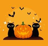 Halloween card with pumpkin and cats blacks. Vector illustration design stock illustration
