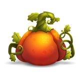 Halloween cartoon pumpkin  on white background. Stock Image