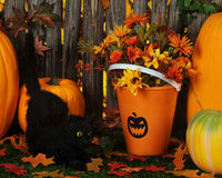 Halloween Cat Stock Images