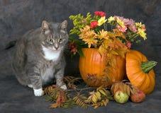Halloween cat. Autumn stillife with cat and pumpkin Stock Photos