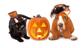 Halloween Cat and Dog in Funny Hats Stock Photo